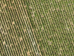 agriculture-de-precision-geomatic-development